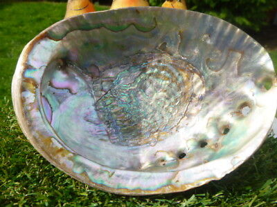 Lovely *multi *colour  Detailed Shell * Beautiful Condition * Bargain * Unusual