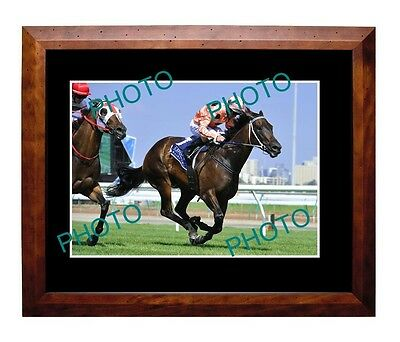 Black Caviar Australian Horse Racing Superstar Large A3 Photo 1