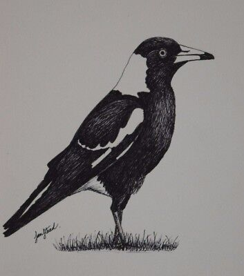 "Small Ink Sketch/Drawing 8 X 10 - Original Art - ""Magpie"""
