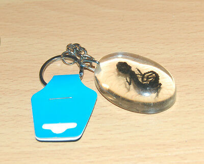 "Real Lizard in Clear Resin Keychain. Key Chain. 2"" long. With Tags."