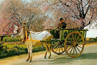 Picture Postcard~ Algarve, Typical Cart And Almond Blossom