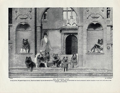 Keeshond Mrs Wingfield Digby's Dogs At Sherborne Castle  Original 1934 Dog Print