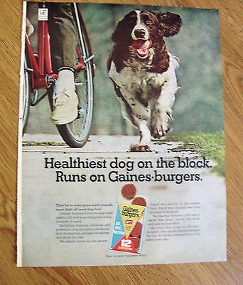 1967 Gaines Burgers Dog Food Ad Spaniel Type Dog? Healthiest Dog on the Block