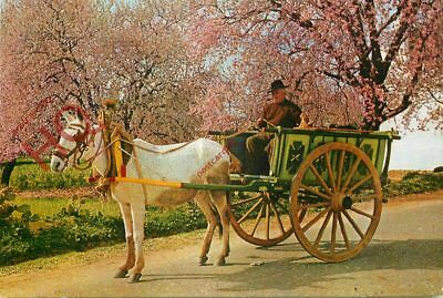 Picture Postcard, Algarve, Typical Cart And Almond Blossom