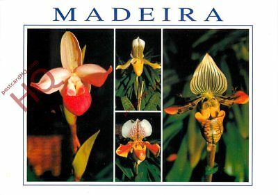 Picture Postcard- Madeira, Orchids ('Venus' Slippers') (Multiview)