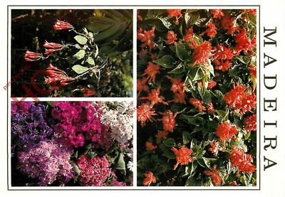 Picture Postcard; Madeira, Flowers (Multiview)