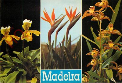 Picture Postcard::Madeira, Flowers (Multiview)