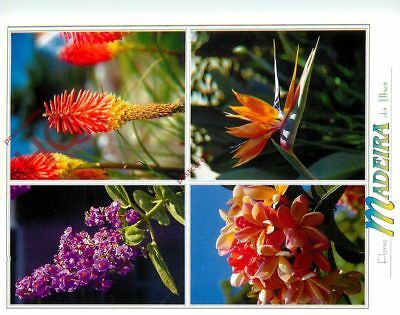 Picture Postcard--Madeira, Flowers (Multiview)