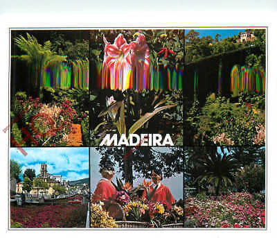 Picture Postcard; Madeira (Multiview) (Bad Scan)