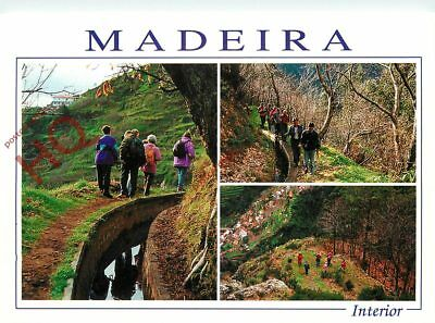 Picture Postcard~ Madeira, Interior