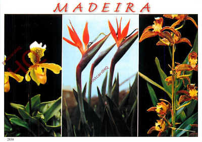 Picture Postcard; Madeira (Multiview) Flowers