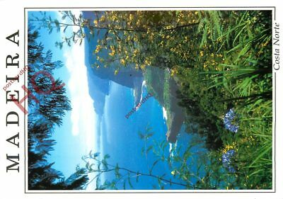 Picture Postcard~ Madeira, Costa Norte, North Coast From Faial