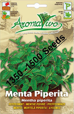 Peppermint Herb Seeds (1350 - 1500) seeds Superior Quality Very Fresh seeds.