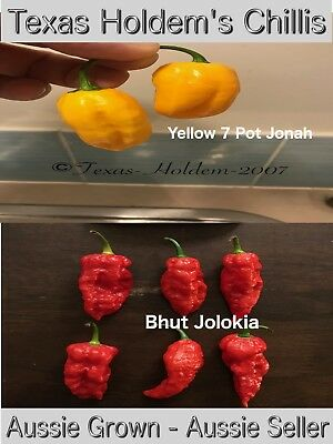 40 x Chilli Seeds - Trinidad Yellow 7 Pot Jonah and Bhut Jolokias.  HOT Chili
