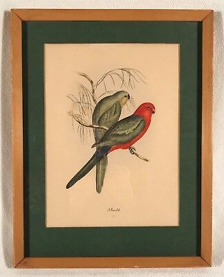 Vintage Original Colored Litho Monograph Print ~ John Gould ~ Framed ~ Birds #2