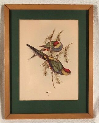 Vintage Original Colored Litho Monograph Print ~ John Gould ~ Framed ~ Birds #3