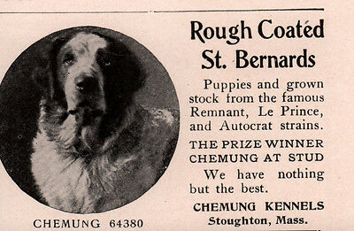 Early Ad Rough Coated St Bernards Chemung Kennels Stoughton