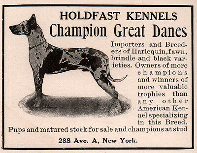 Ad Lot Of 6 Early  Ads Great Dane Breeder Kennel Holdfast Martin Foster