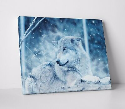 White Wolf Nature Animal Beauty Snow Wall Art Canvas Print Picture Sale A2 A1 A0