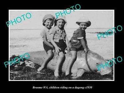 Old Large Historic Photo Of Broome West Australia, Children Riding A Dugong 1930