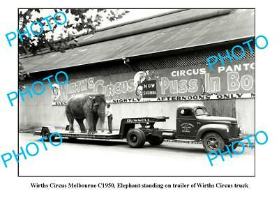 OLD LARGE PHOTO WIRTHS CIRCUS ELEPHANT c1950 MELB 1