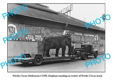 OLD LARGE PHOTO WIRTHS CIRCUS ELEPHANT c1950 MELBOURNE