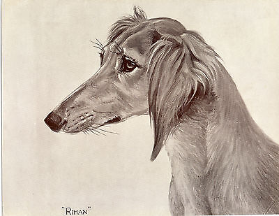 Saluki Named Dog Lovely Sepia Head Study Old Original Dog Art Print From 1935