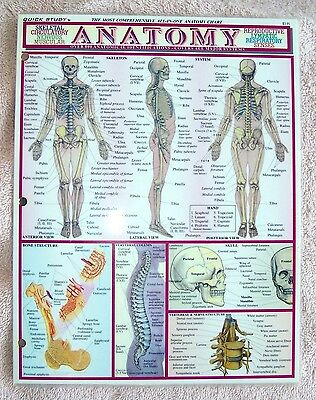 2 Page 8 1/2 inch by 10 inch Anatomy Chart Artists: Vincent Perez Studio 4 Sides