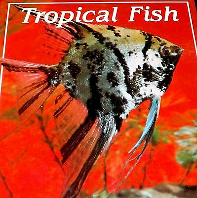 Tropical Fish - (Practical advise for beginners) - Posters -Paperback Paper Book