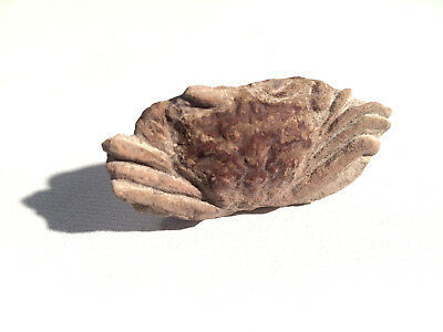 "Crab Fossil Crab Nice Specimen 2"" Oceanic Fossil -  Free Shipping"