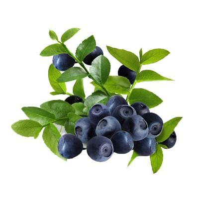 100Pcs Blueberry Tree Seed Fruit Blueberry Seed Potted Bonsai Seeds Garden Plant