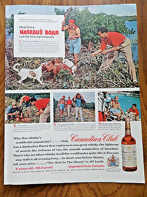 1956 Canadian Club Whiskey Ad Nassau Bahamas Abaco Brushlands Boar Hunting