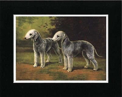 Bedlington Terrier Two Dogs Vintage Style Dog Art Print Matted Ready To Frame