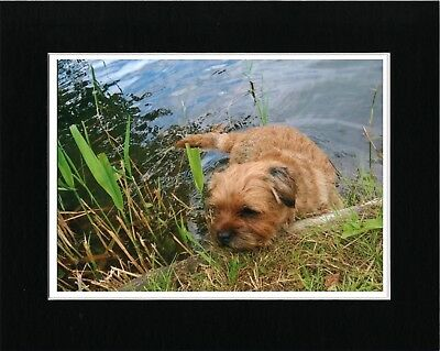 Border Terrier In Pond Lovely Vintage Style Dog Art Print Matted Ready To Frame