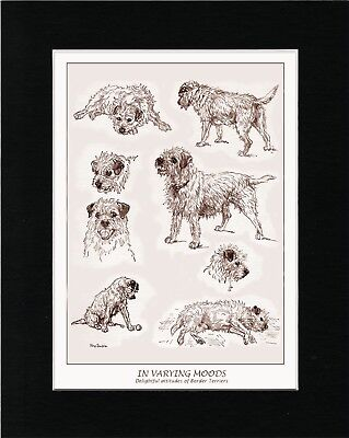 Border Terrier In Various Poses Lovely Vintage Style Dog Art Print Ready Matted