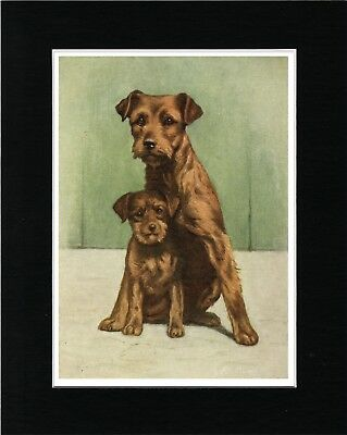 Border Terrier Mother And Pup Lovely Vintage Style Dog Art Print Ready Matted