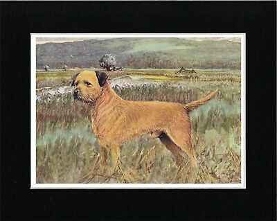 Border Terrier In Rural Setting Lovely Vintage Style Dog Art Print Ready Matted
