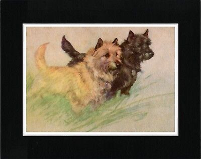 Cairn Terrier Dogs Lovely Vintage Style Dog Art Print Matted Ready To Frame