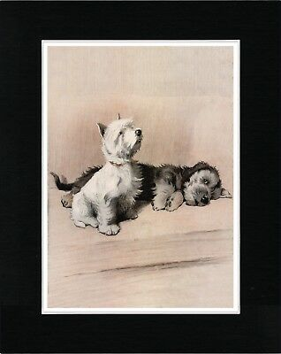 Dandie Dinmont And Westie Terrier Vintage Style Dog Art Print Ready Matted