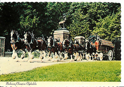 BUDWEISER BREWERY CLYDESDALE DRAFT HORSE HITCH POSTCARD GRANT'S FARM ST LOUIS c6