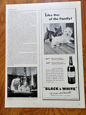 1946 Black White Scottish Scottie Terrier Westie Ad Like One of the Family