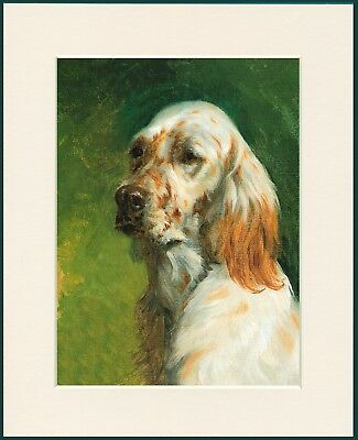 English Setter Head Study Lovely Dog Print Mounted Ready To Frame