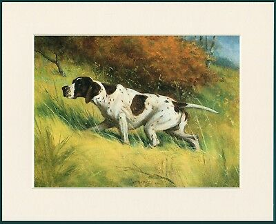 Pointer Great Dog Print Mounted Ready To Frame