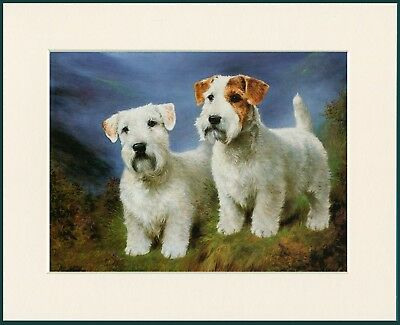Sealyham Terrier Two Dogs Great Dog Print Mounted Ready To Frame
