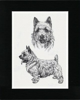 Norwich Terrier Vintage Style Dog Art Sketch Print Matted Ready To Frame