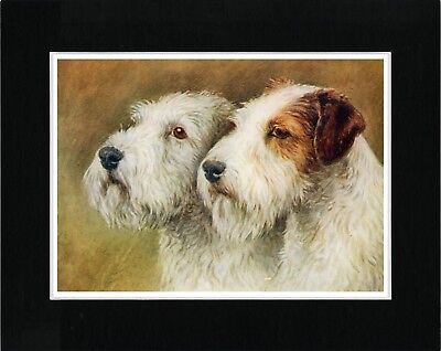 Sealyham Terrier Two Dogs Head Study Vintage Style Dog Art Print Ready Matted