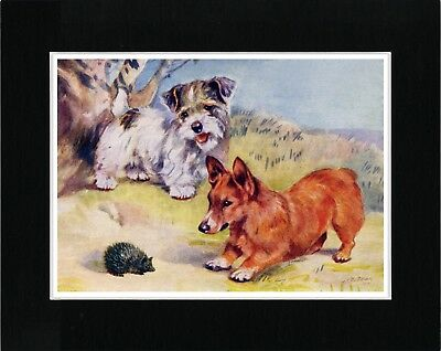 Sealyham Terrier Welsh Corgi And Hedgehog Vintage Style Dog Art Print Matted