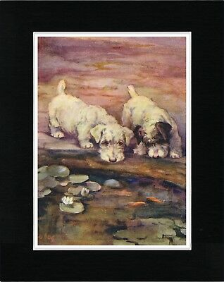Sealyham Terrier Dogs Looking In Pond Vintage Style Dog Art Print Ready  Matted