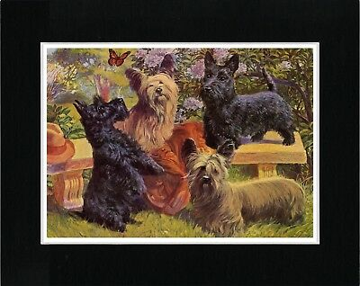 Skye And Scottish Terrier Dogs Lovely Vintage Style Dog Art Print Ready  Matted