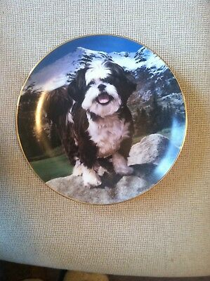 Danbury Mint King of the Hill by Simon Mendez Shih Tzu Collector Plate